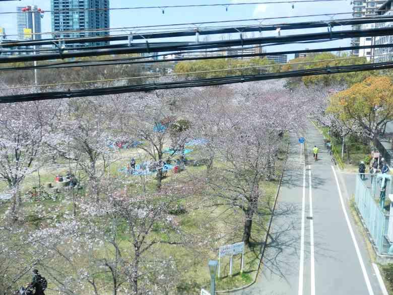 環状線桜ノ宮駅から見る、毛馬桜ノ宮公園の全景3