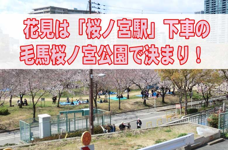 花見は「桜ノ宮駅」下車の毛馬桜ノ宮公園で決まり!